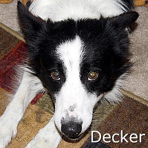Decker_TN.jpg