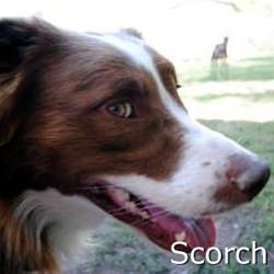 Scorch_TN.jpg