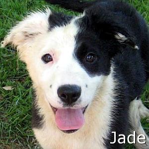 Jade_TN.jpg