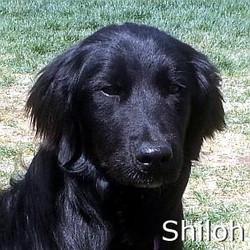 Shiloh_TN.jpg