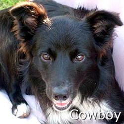 Cowboy2_TN.jpg