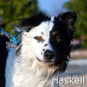 Haskell_TN.jpg
