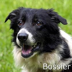 Bossier_TN.jpg