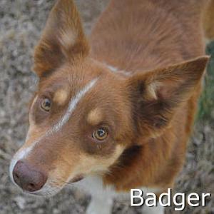Badger_TN.jpg