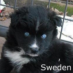 Sweden_TN.jpg