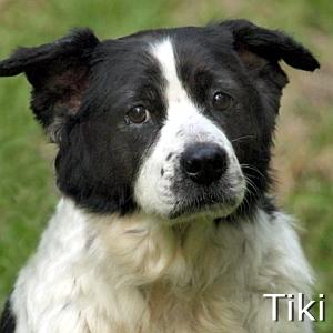 Tiki_TN.jpg