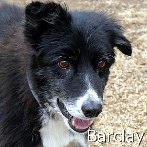 Barclay_TN.jpg