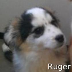 Ruger_TN.jpg