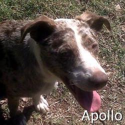 Apollo_TN.jpg