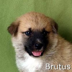 Brutus_TN.jpg