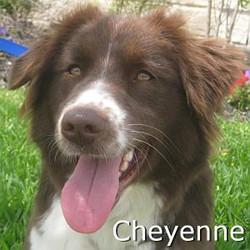 Cheyenne_TN.jpg