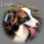 Leigh_Profile_RIP.jpg
