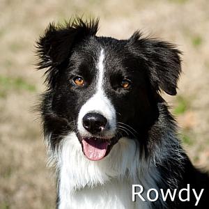 Rowdy_TN.jpg