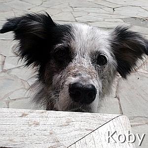 Koby_TN.jpg