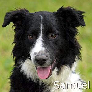 Samuel_TN.jpg