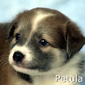 Petula_TN.jpg
