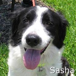 Sasha_TN.jpg
