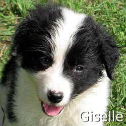 Giselle_TN.jpg