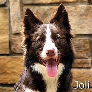 Joli-TN