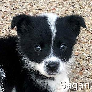 Sagan_TN.jpg