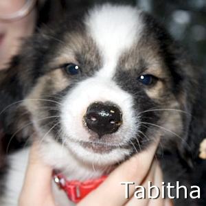 Tabitha_TN.jpg