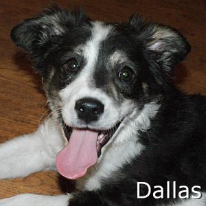 Dallas_TN.jpg