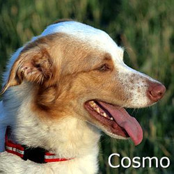 Cosmo_TN.jpg