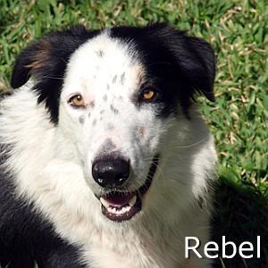 Rebel_TN.jpg