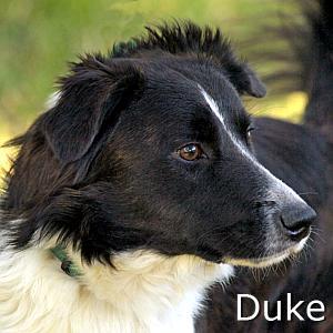 Duke_TN.jpg