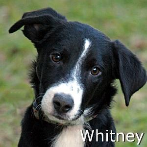 Whitney_TN.jpg