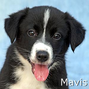 Mavis_TN.jpg