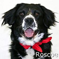 Roscoe_TN.jpg
