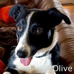 Olive_TM.jpg