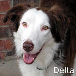 Delta_TN.jpg