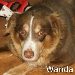 Wanda_TN.jpg