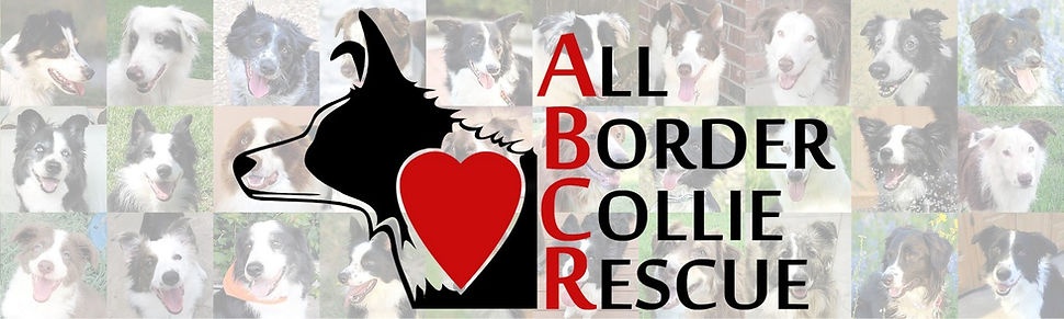 All Border Collie Rescue Border Collie Rescue Texas Oklahoma