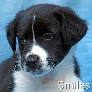 Smiles_TN.jpg