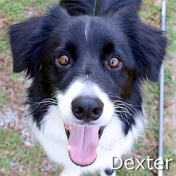 Dexter_TN