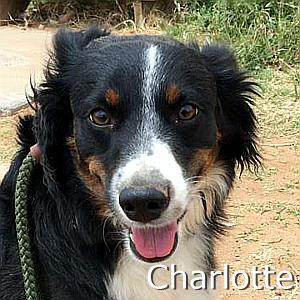 Charotte_TN.jpg