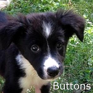 Buttons_TN.jpg