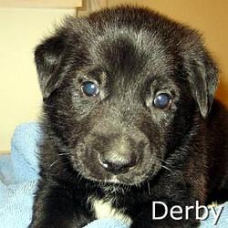 Derby_TN.jpg