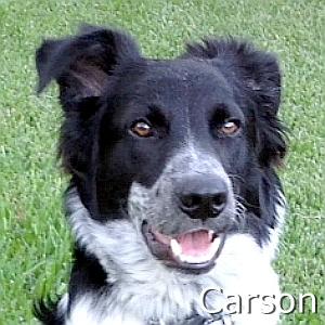 Carson_TN.jpg