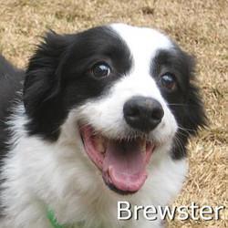 Brewster_TN.jpg