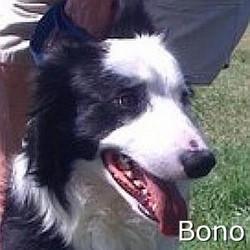 Bono_TN.jpg