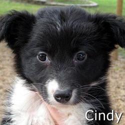 Cindy_TN.jpg