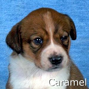Caramel_TN.jpg