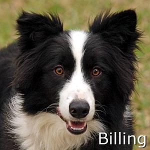 Billing_TN.jpg