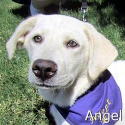 Angel2_TN.jpg