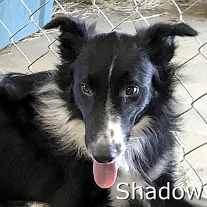 Shadow-TN