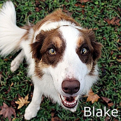 Blake-TN